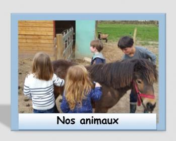 Nos animaux 2