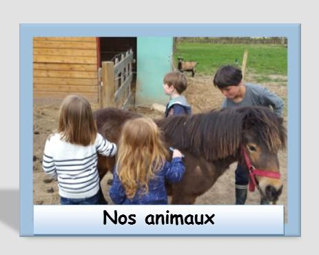 Nos animaux 3